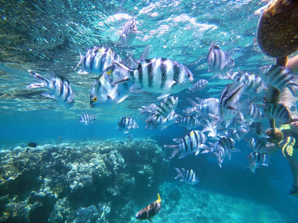 Sznorkelezés a Coral beachen